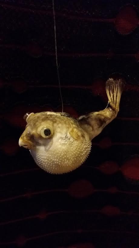 Medium puffer fish on storenvy for Puffer fish costume