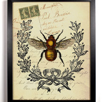 Image of Bee Insect Antique Illustration 8 x 10