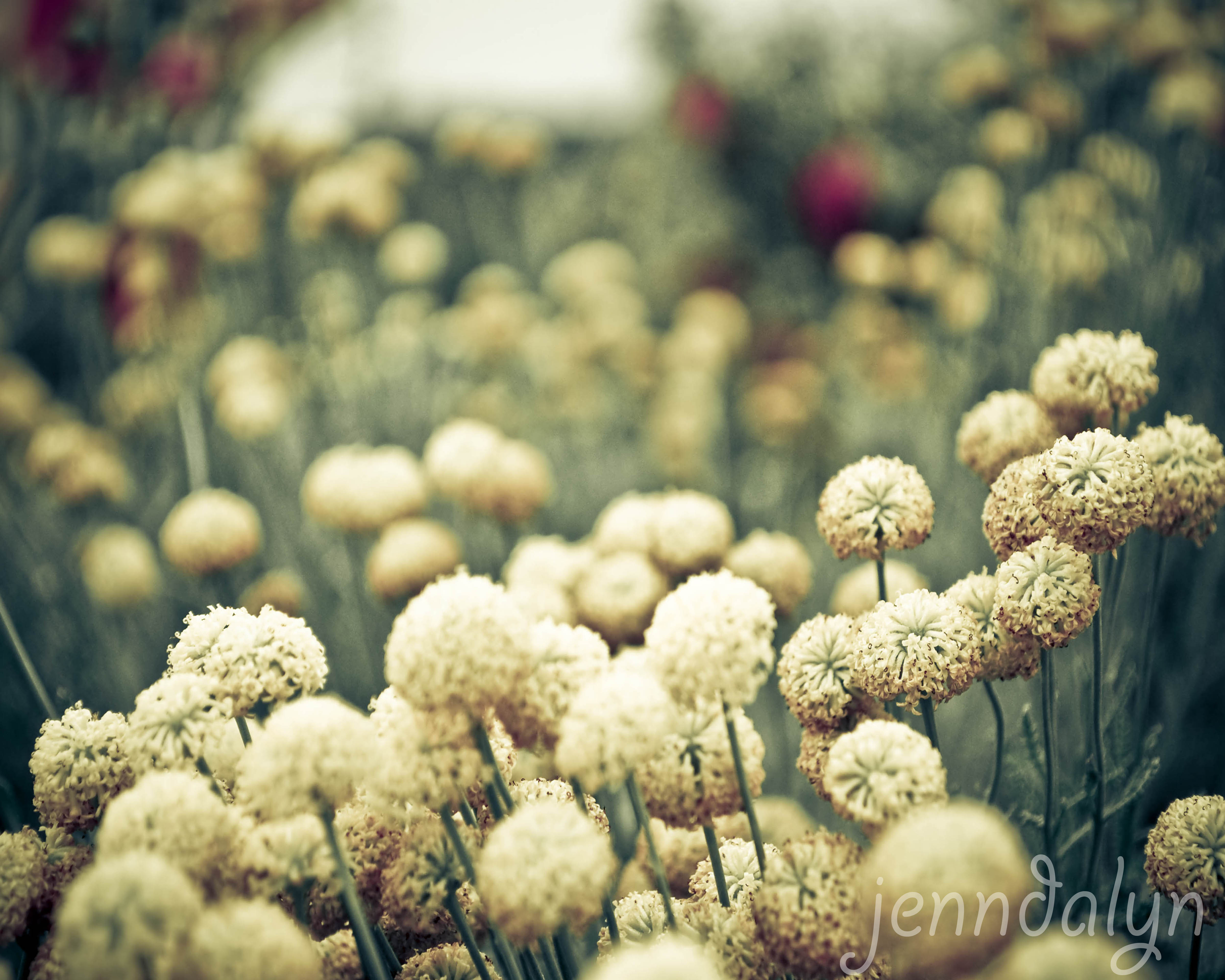 A Wrinkle In Time - 8 x 10 fine art photograph, flower photography ...