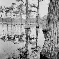 Georgia Swamp, Large Format
