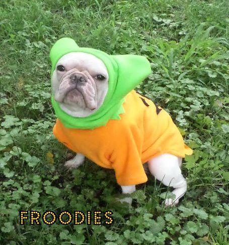 Punkin9 small & French Bulldog Boston Terrier Pug Dog Froodies Hoodies Halloween ...