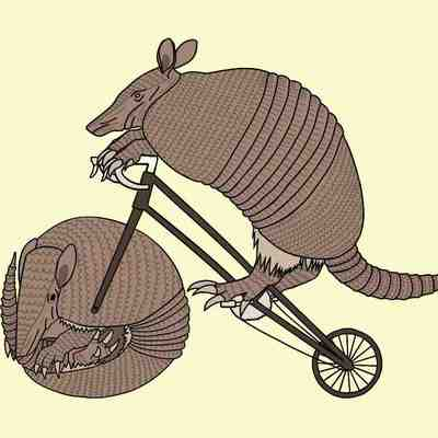 Armadillo riding bike with armadillo wheel 5x5 print