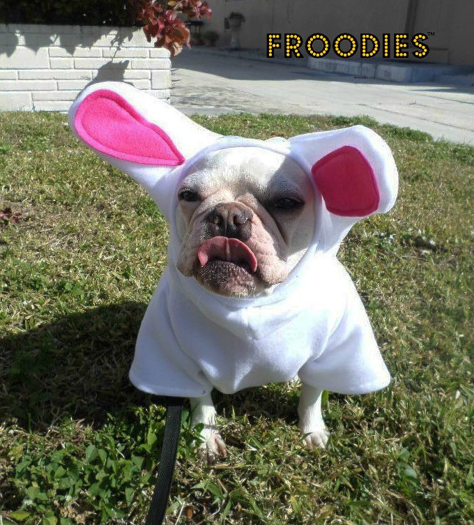 french bulldog boston terrier pug dog froodies hoodies