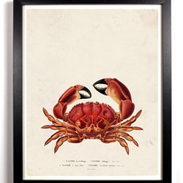 Image of The Big Red Crab Vintage Giclee series 8 x 10