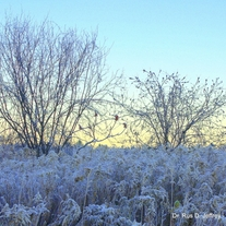 Wm_-_frosty_sunrise_medium