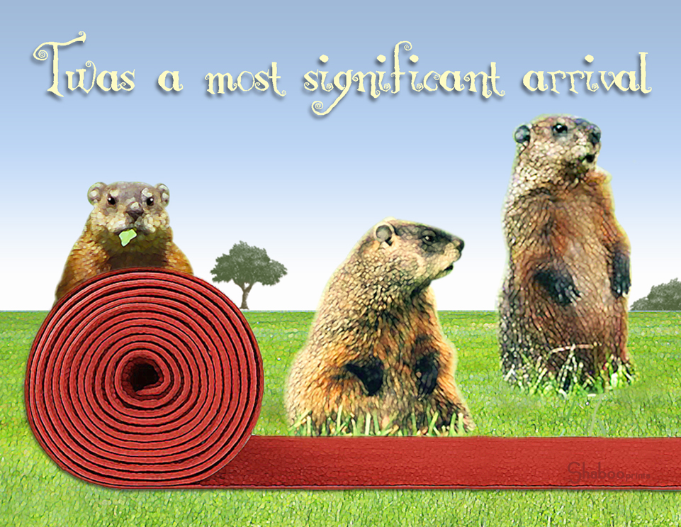 Funny Groundhog Birthday Card Red Carpet Welcome By