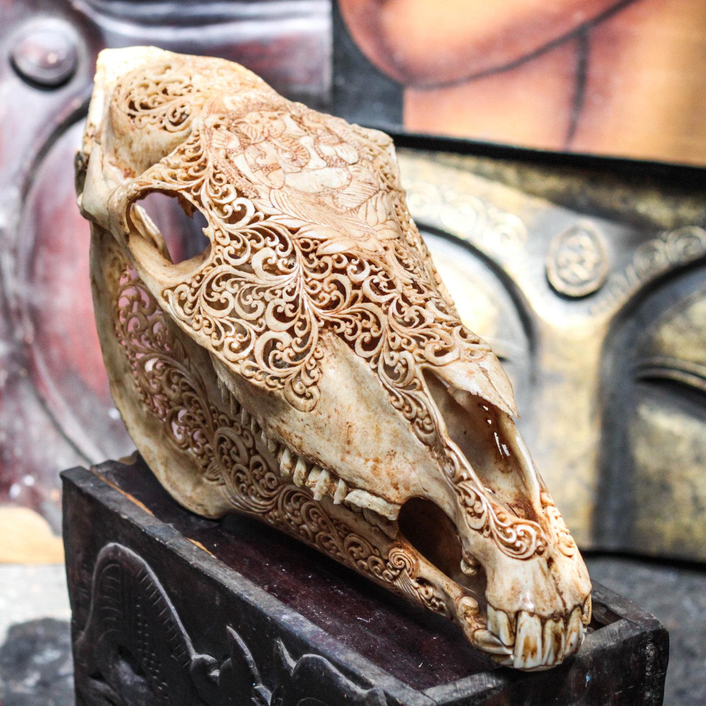 Hand Carved Ganesha Horse Skull Real Mule Animal Skull Bone With Teeth Vintage Taxidermy Sold By Aureus Arts On Storenvy