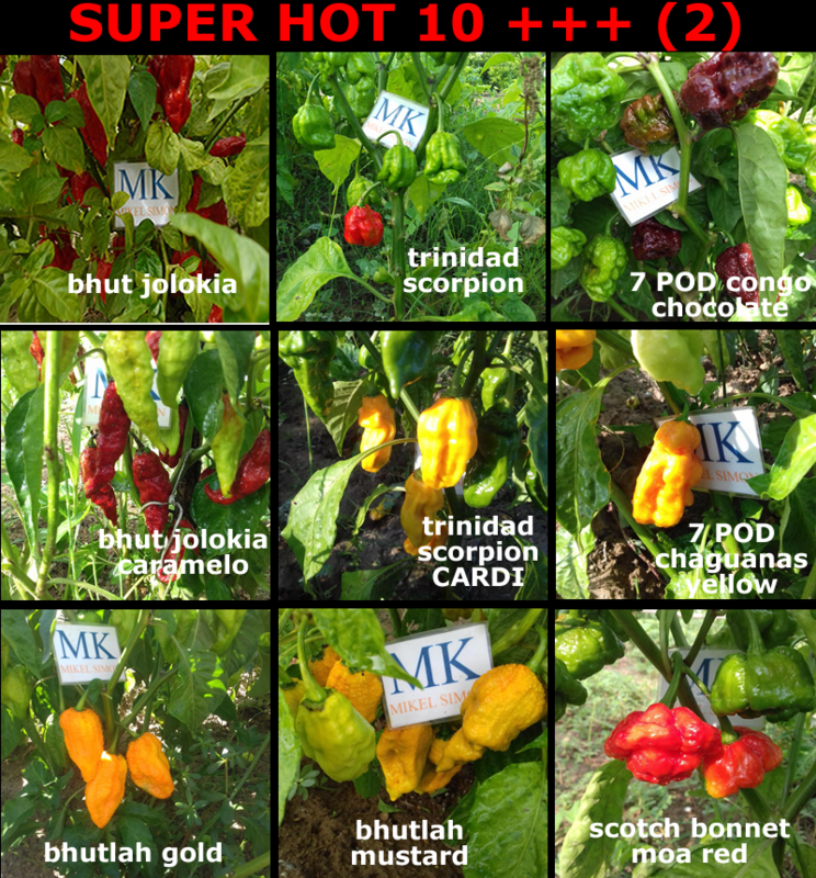 9X10 7 pack SUPER HOT 10 +++ 90 seeds 9 hottest chili peppers in the world