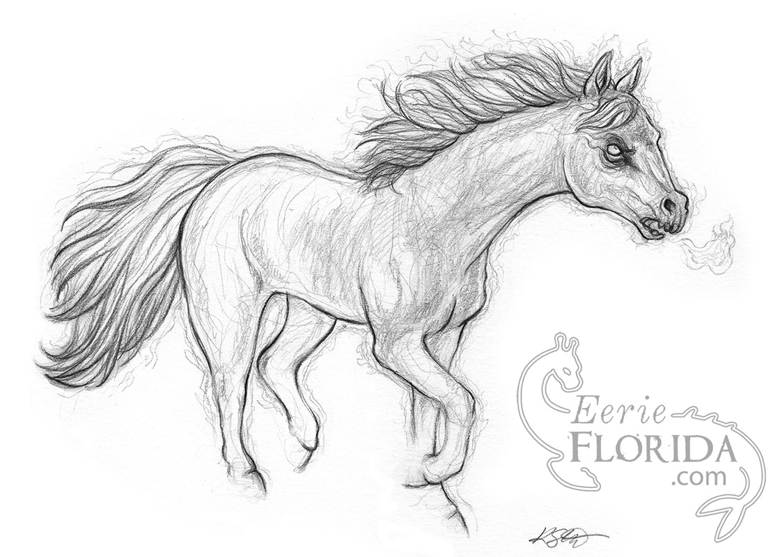 Freaky Florida Ghost Horse Of Oakhurst 5x7 Art Print Sold By Eerie Florida On Storenvy